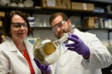 Chris McCurdy and Bonnie Avery conduct kratom research to treat pain and addiction